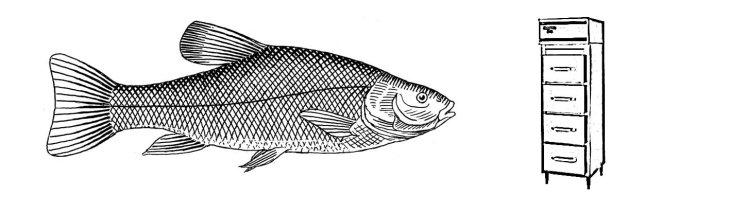 Fish File