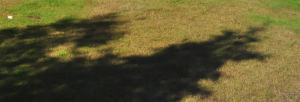 Posting the shadow of a tree
